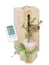 Picture of Living Tree with Weather Station Gift