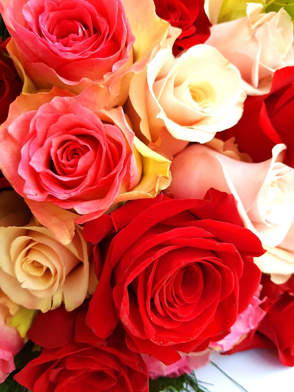 Mixed Roses Fresh Mixed Rose Bouquet Free Delivery