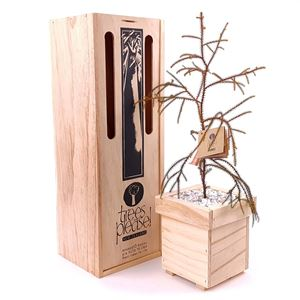 Picture of Living Rimu Tree Gift