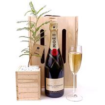 Picture of Living Tree with Laurent Perrier Champagne