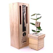 Picture of Living Feijoa Tree Gift