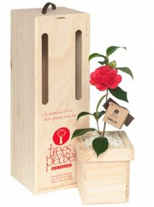 Picture of Express Your Love Tree Gift