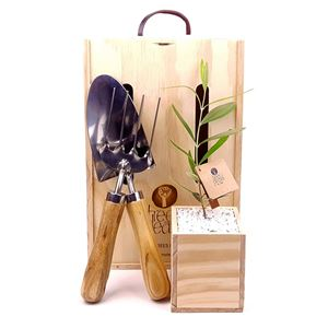Picture of Living Tree with Trowel & Handfork Gift