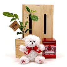 Picture of Tea, Tree and Teddy