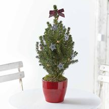 Picture of Merry Little Christmas Tree