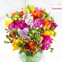 Picture of Scented Freesias