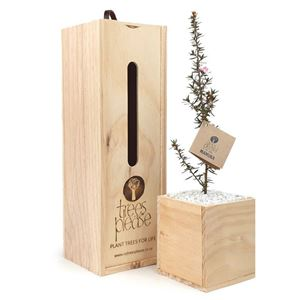 Picture of Manuka Tree Gift