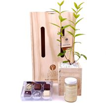 Picture of Pohutukawa Indulgence Living Tree Gift