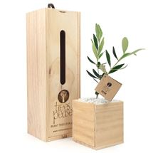 Picture of Single Living Tree Gift